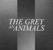 The Grey An Animals