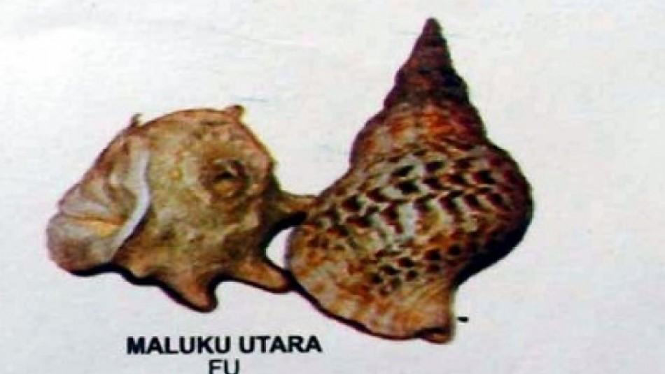 Alat Musik 'Fu' Maluku Utara